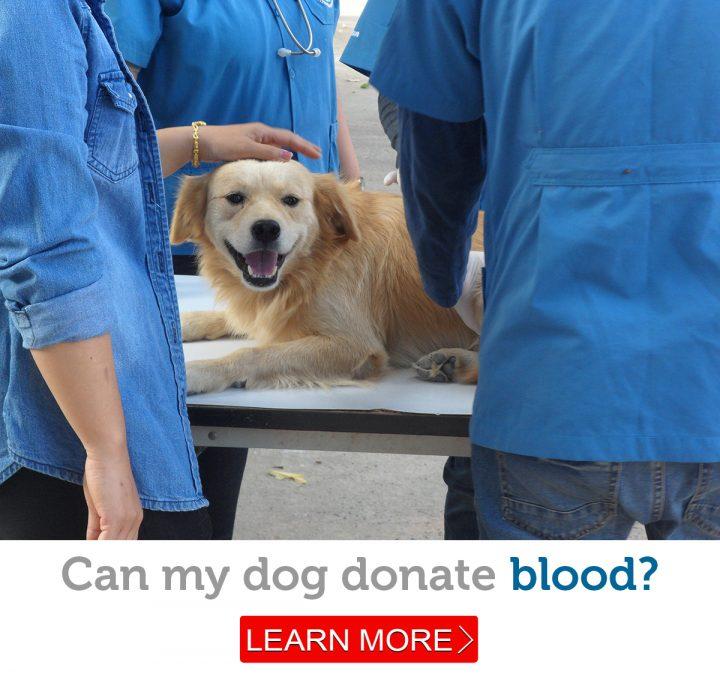 A friendly dog on a veterinary exam table