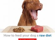 Want to feed your dog a raw diet? Here's how!