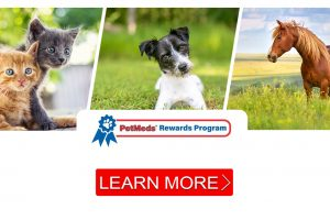 How you can earn Paw Points with the PetMeds rewards program!
