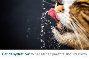 Learn to recognize the signs of dehydration in cats