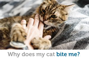Why cats bite, and how to stop this behavior