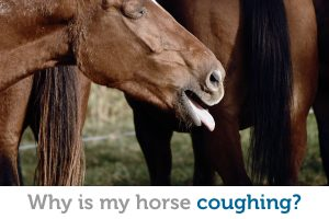Coughing in horses: Causes, prevention and treatment