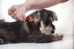 Caring For A Pet With Diabetes