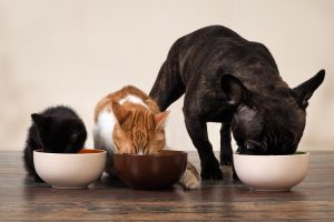 What to Feed your Pet with Diabetes