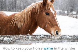 Does your horse need a blanket? Tips for keeping your horse warm in the winter