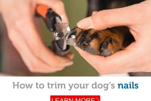 How to make trimming your dog's nails stress-free (for you and your dog!)