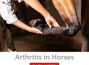 Arthritis in horses: Symptoms, diagnosis and treatment options