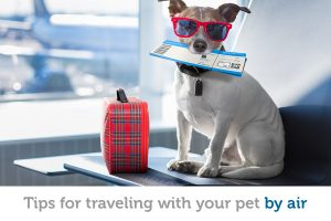Flying with your pet? Tips for a stress-free trip