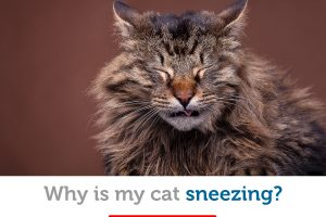How to tell if your cat's sneezing is a sign of something more serious