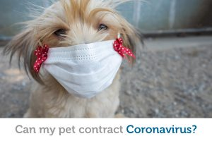 Pets and Coronavirus: What you need to know