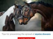 How you can help stop the spread of equine diseases