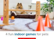 Stuck inside? 4 fun games you can play indoors with your dog or cat