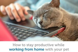 Working from home? How to stay focused when your coworker is a pet