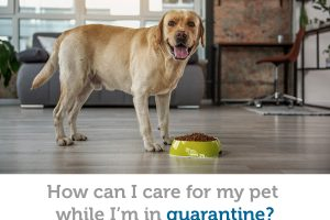 Under quarantine? Preparations and precautions for your pets