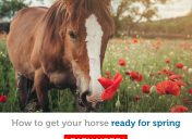 It's almost spring! Here's how to prepare your horse