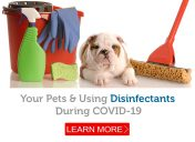 COVID-19: How to safely clean and disinfect your house when you have pets