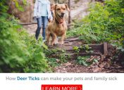 How to protect your pets and your family from deer ticks