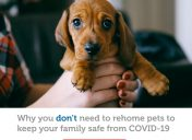You DO NOT need to rehome your pet due to COVID-19