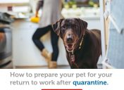 Life after quarantine: how to prepare your pet for your return to work