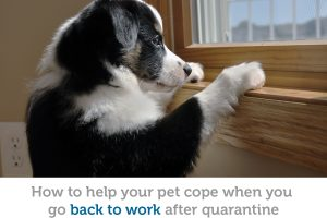 Life after quarantine: help your pet cope when you return to work