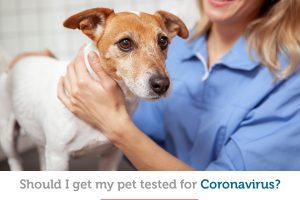 Coronavirus and pets: Should my pet get tested?