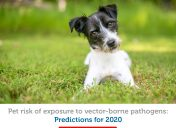 Is your pet at risk from parasites? The forecast for 2020