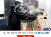 Tips for keeping your horse cool in the hot summer months