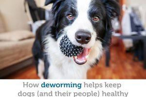 Could your dog have worms? Here's how to tell