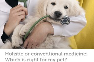 How to determine if holistic or conventional veterinary medicine is right for your pet