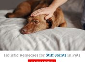 Learn how holistic remedies can help your pet's stiff joints