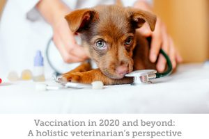 Pet vaccinations: a holistic vet's perspective