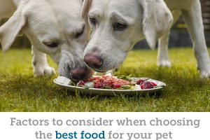 A holistic vet's thoughts on choosing the best pet food