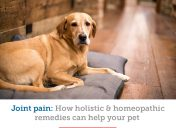 A veterinarian's insight on holistic and homeopathic remedies for joint pain in pets