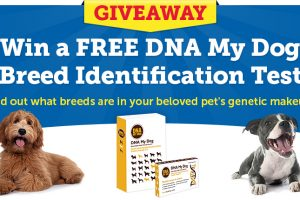 [Giveaway] DNA My Dog Breed Identification Test