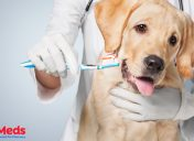 February is Pet Dental Health Month