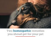The two homeopathic remedies your pet needs