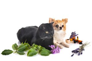 Can holistic remedies help with pet anxiety?