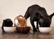 When to use limited ingredient diets on pets.