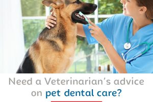 Need a Veterinarian's advice on pet dental care?