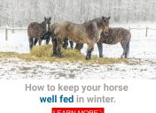 How to keep your horse well fed in winter.