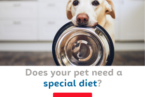 Does your pet need a special diet?