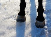 Should your horse wear winter shoes?