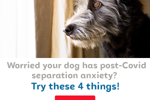 Post-Covid separation anxiety in dogs is real
