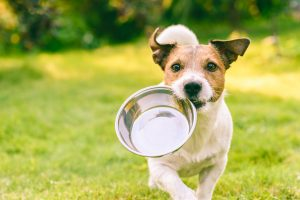 How do I recognize when my pet is dehydrated?