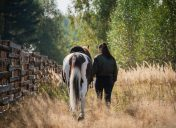 How can I exercise my horse without going for a ride?