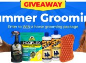 [Giveway] Summer Grooming For Horses