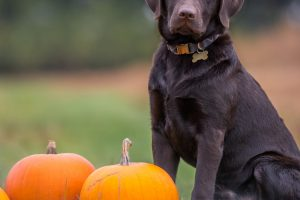 From Our Holistic Vet: Solutions For Halloween Hazards & Holiday Anxiety